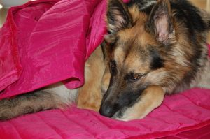 achtsamkeitstraining-hund